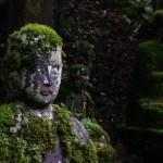I riti contemplativi del giardiniere appassionato