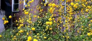 loisaidayellowflowers1