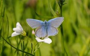 blue_butterfly_on__3339173b-jpg
